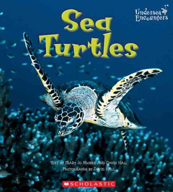 Sea Turtles (Undersea Encounters)
