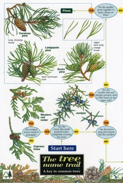 Tree Name Trail